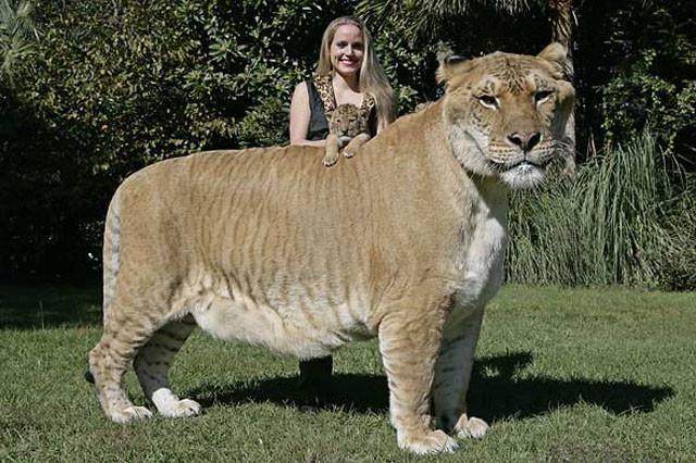 weird-hybrid-animals-that-actually-exist-31782