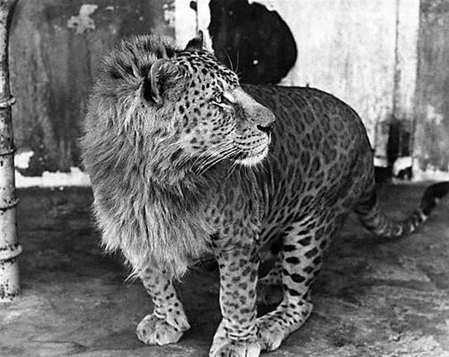 weird-hybrid-animals-that-actually-exist-35759