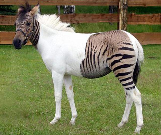 weird-hybrid-animals-that-actually-exist-47963