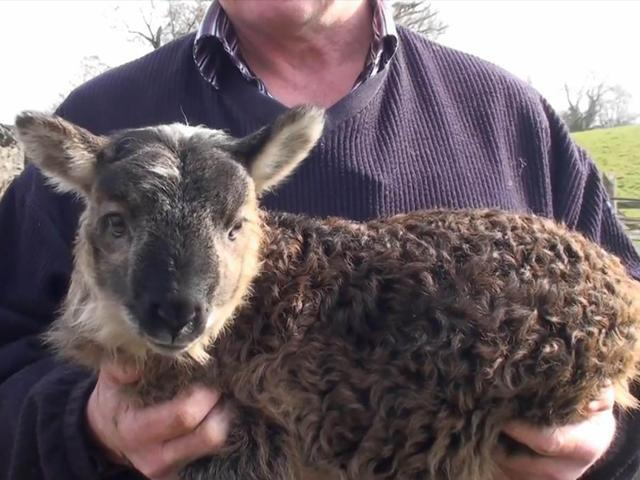 weird-hybrid-animals-that-actually-exist-51056