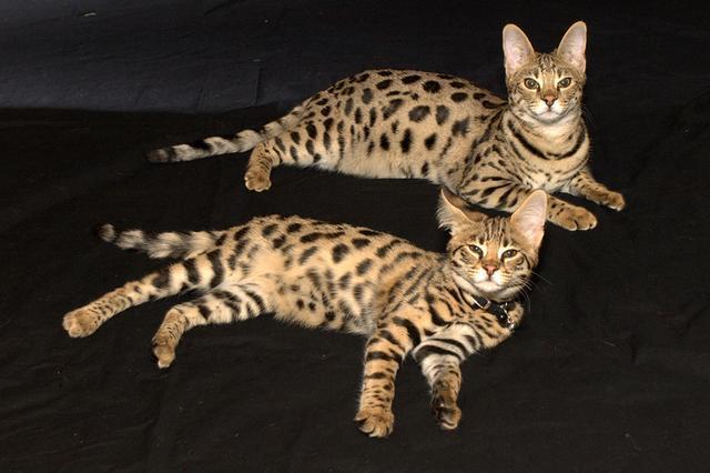 weird-hybrid-animals-that-actually-exist-67090