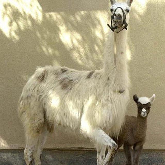 weird-hybrid-animals-that-actually-exist-74808