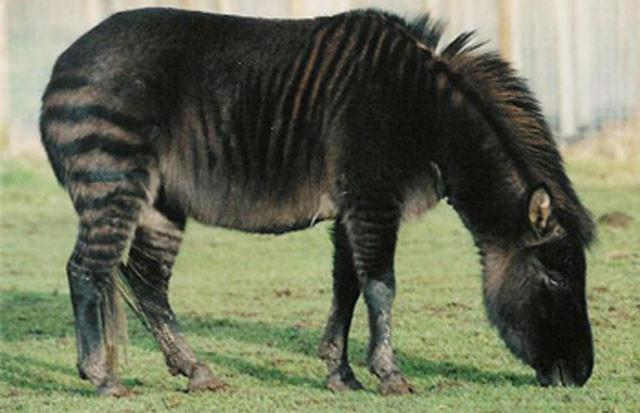 weird-hybrid-animals-that-actually-exist-79859