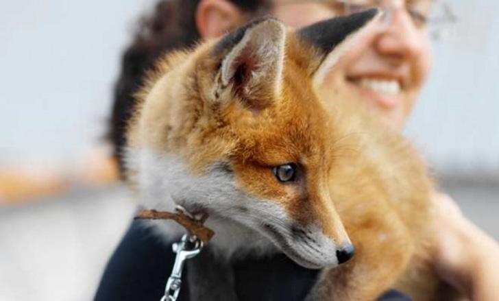 Dlaczego niektóre gatunki zwierząt nigdy nie zostaną udomowione przez człowieka?