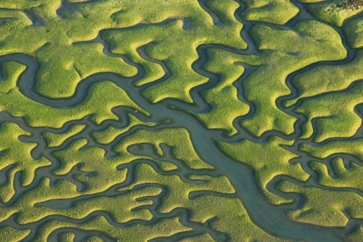 Fraktalne wzory w przyrodzie