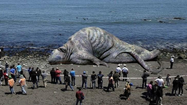 Najdziwniejsze stwory wyłowione z oceanów