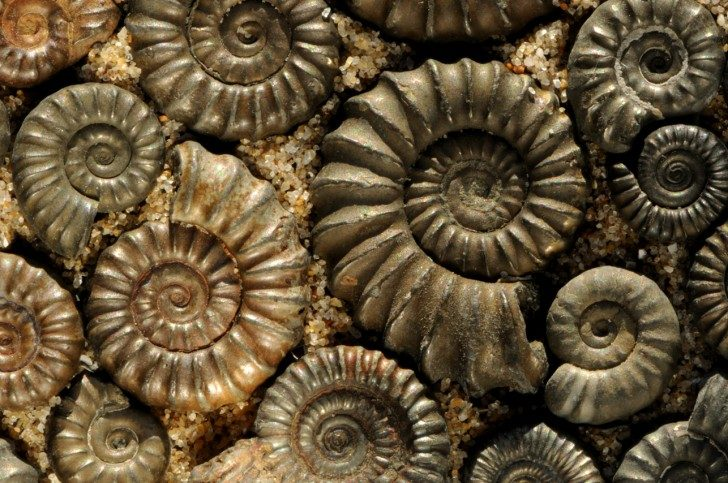Iron-pyrite-ammonites