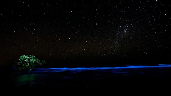 algae-bioluminescence-lone-tree