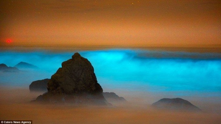 algae-blue-bioluminescence