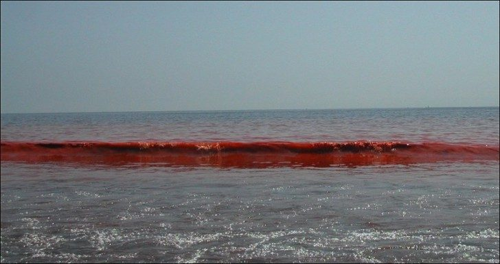 algea-red-tide-waves