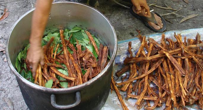 ayahuasca_layering_leaf_and_vine_main_0