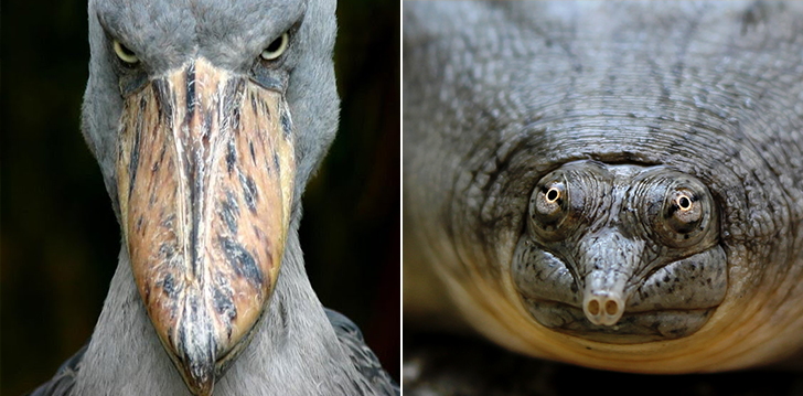 Najdziwniejsze zwierzęta świata