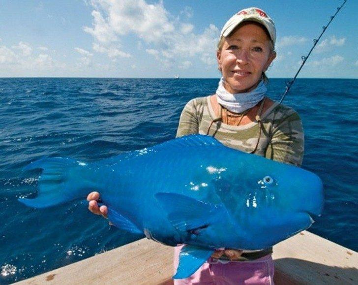 15.-Plava-riba-papiga-čudne-životinje-kakve-niste-videli-750x596