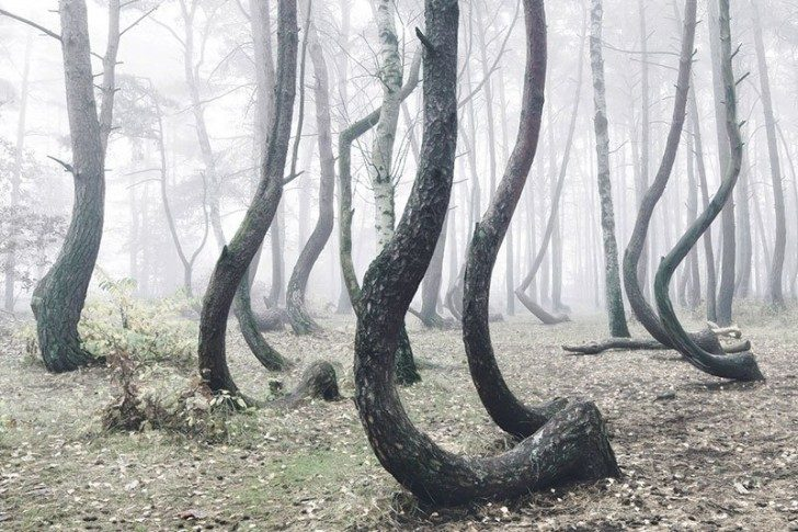 crooked-forest-in-poland-by-kilian-schoenberger-1
