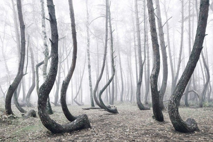 crooked-forest-in-poland-by-kilian-schoenberger-2