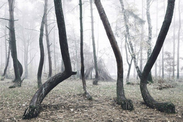 crooked-forest-in-poland-by-kilian-schoenberger-3