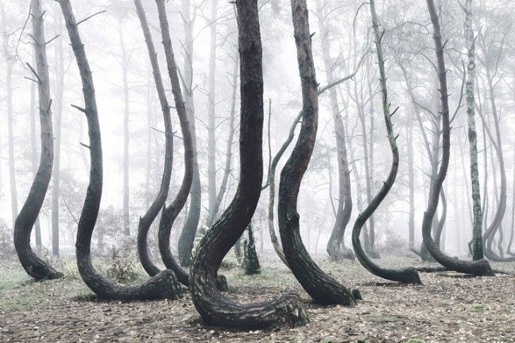 crooked-forest-in-poland-by-kilian-schoenberger-4