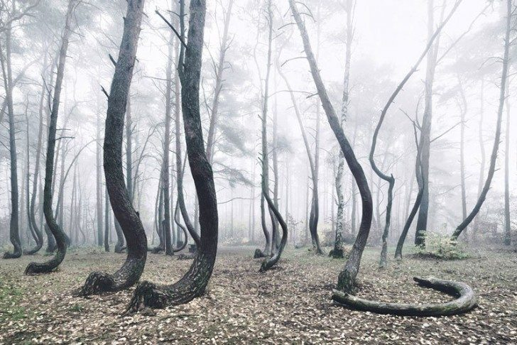 crooked-forest-in-poland-by-kilian-schoenberger-5