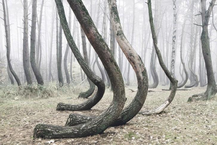 Krzywy las na Pomorzu - jedyny taki na świecie