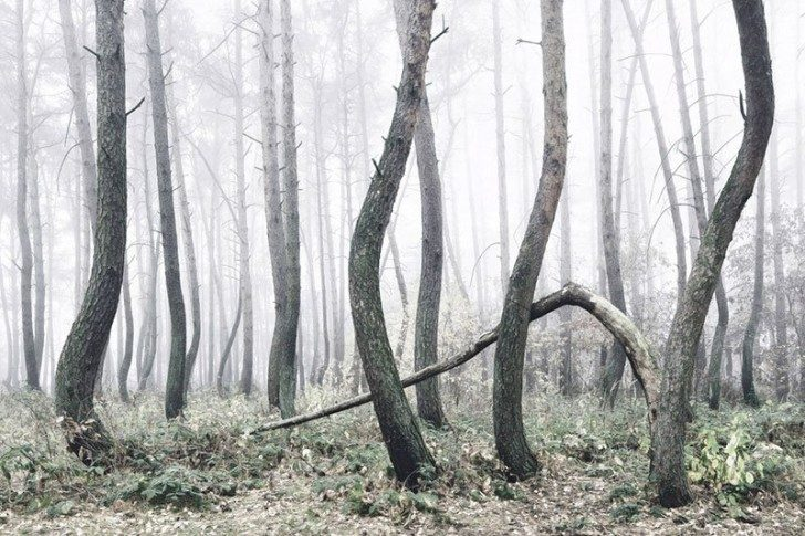 crooked-forest-in-poland-by-kilian-schoenberger-8