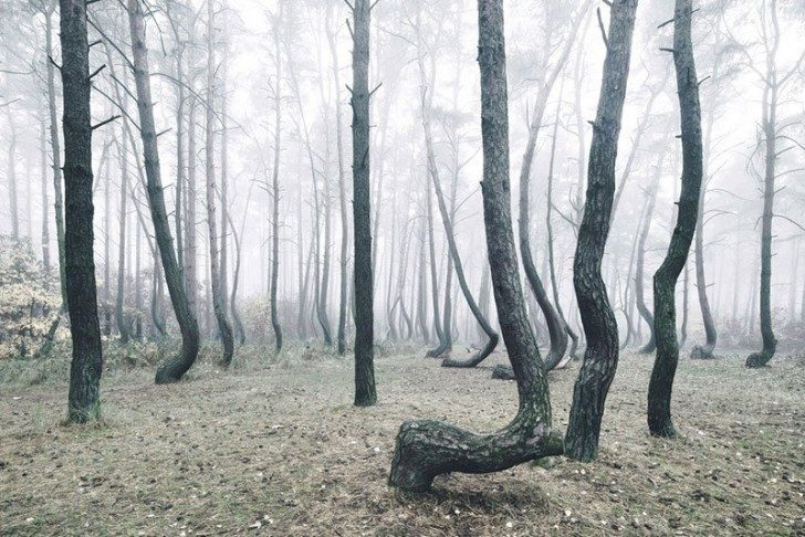 crooked-forest-in-poland-by-kilian-schoenberger-9