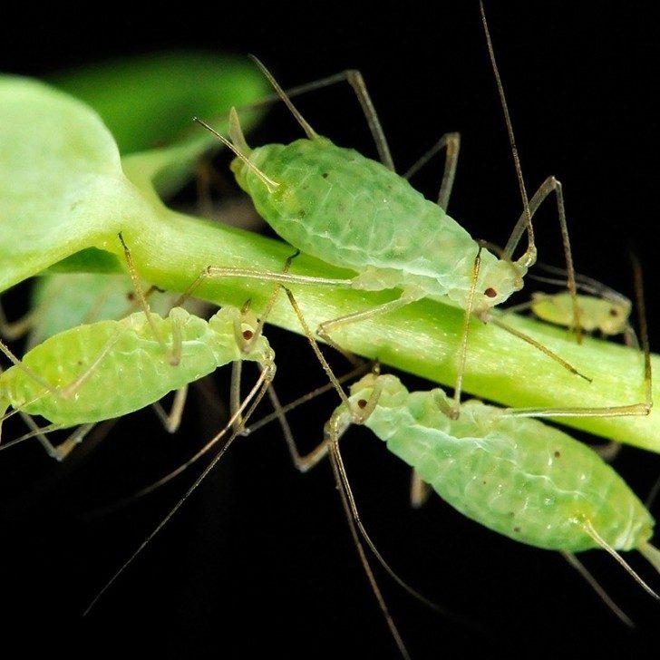 fotosynteza-u-zwierzat
