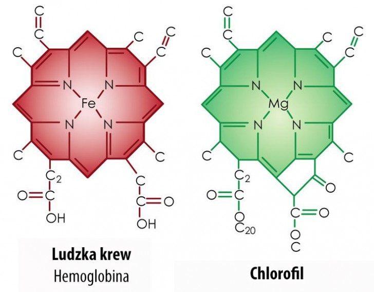 hemoglobina-chlorofil
