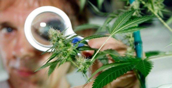 medyczna-marihuana-cbd-padaczka