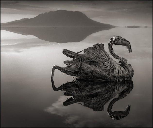 To niezwykłe jezioro zamienia wszystkie zwierzęta w kamienne posągi