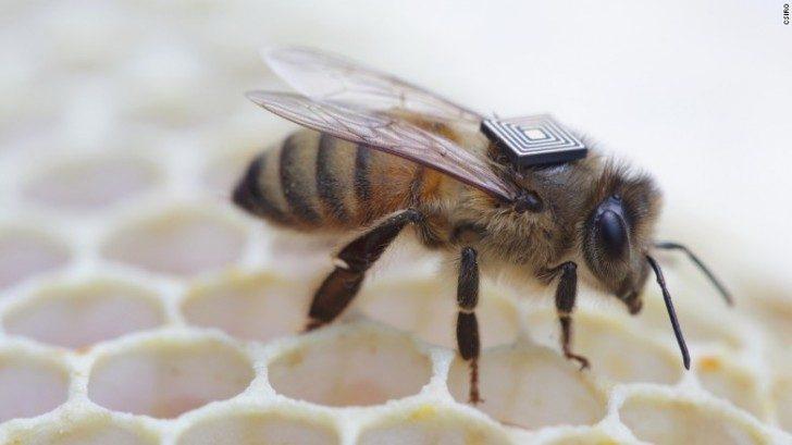 pszczoly-owady-ciekawe