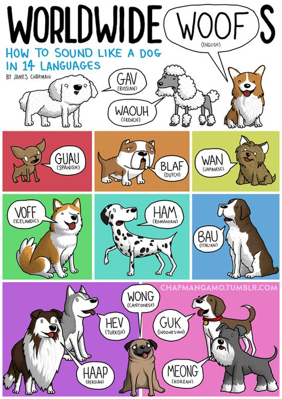 what_noises_do_animals_make_in_other_languages_01