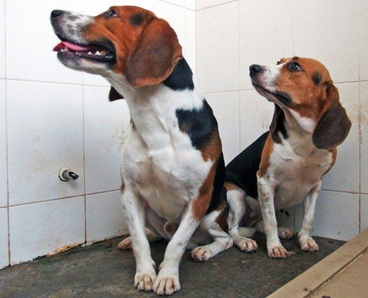 genetycznie-modyfikowane-psy-ciekawe