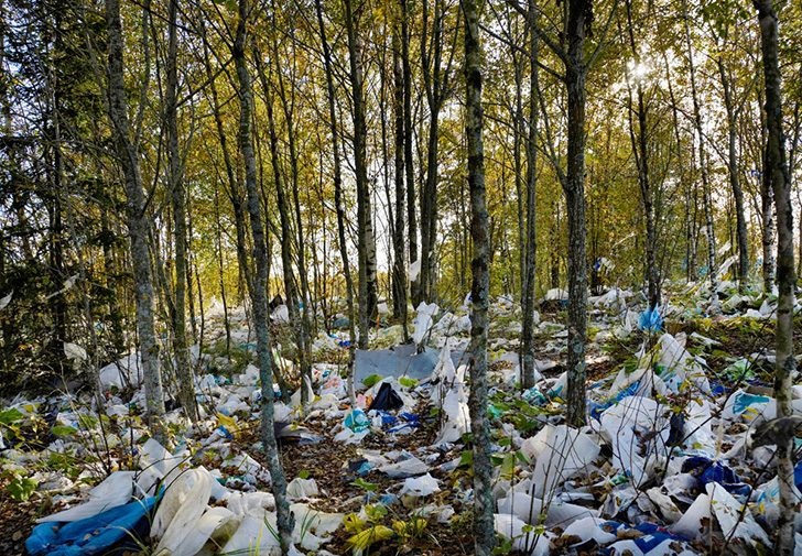 BNA9TF plastic bags, blown, in the forest, environment,