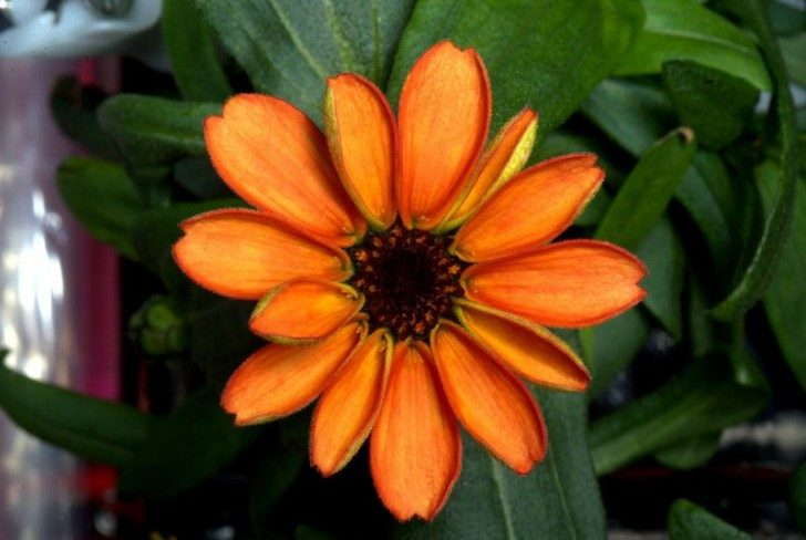 pierwszy-kwiat-w-kosmosie-ciekawe-1