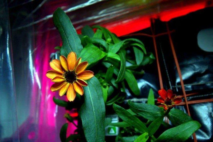 pierwszy-kwiat-w-kosmosie-ciekawe-2