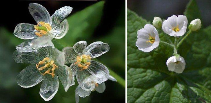 przezroczytsy-kwiat-1
