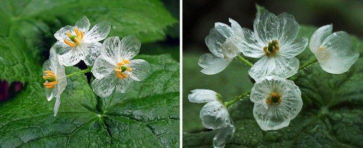 przezroczytsy-kwiat-10
