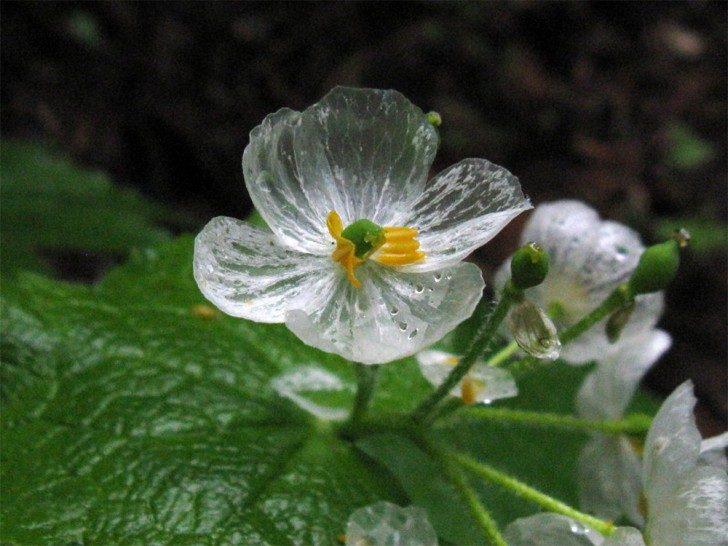 przezroczytsy-kwiat-2