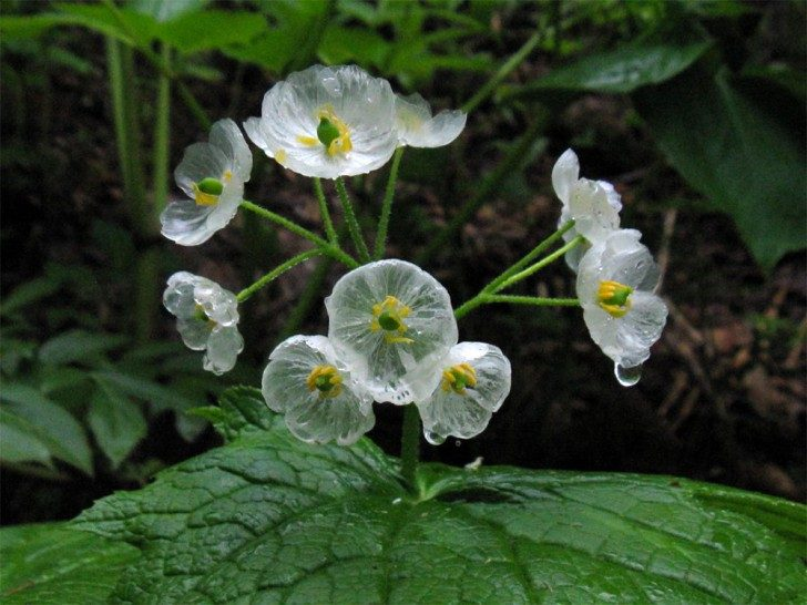 przezroczytsy-kwiat-3