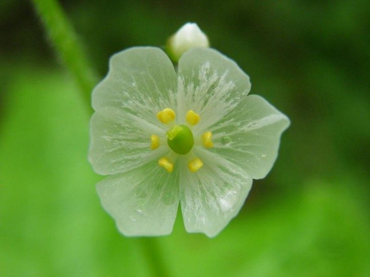 przezroczytsy-kwiat-4