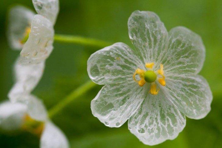 przezroczytsy-kwiat-5