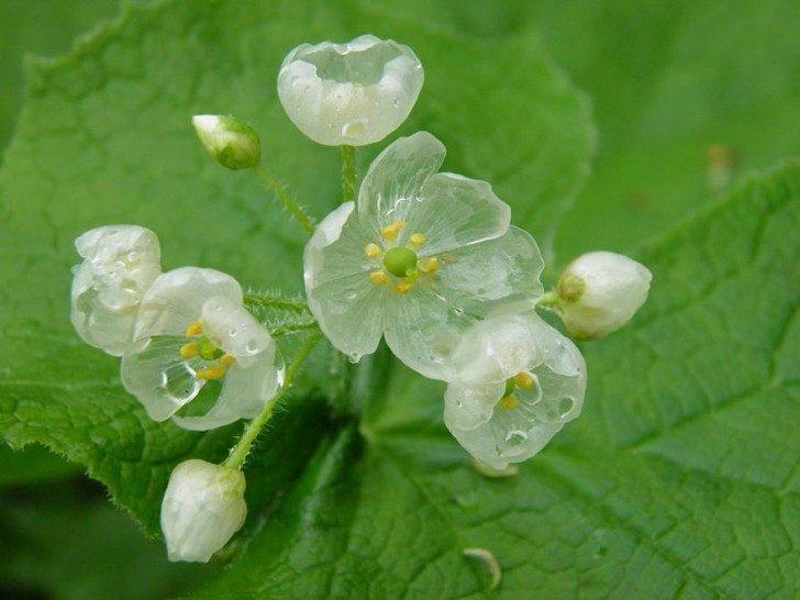 przezroczytsy-kwiat-8