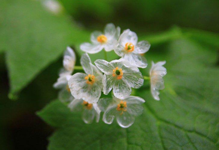 przezroczytsy-kwiat-9