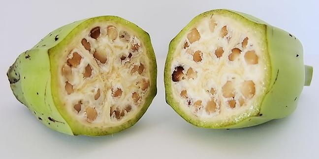 banan-przed-modyfikacjami-1