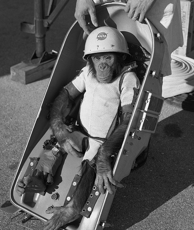 brave-animal-astronauts-who-made-giant-leaps-for-humankind-35075