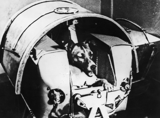 brave-animal-astronauts-who-made-giant-leaps-for-humankind-44888