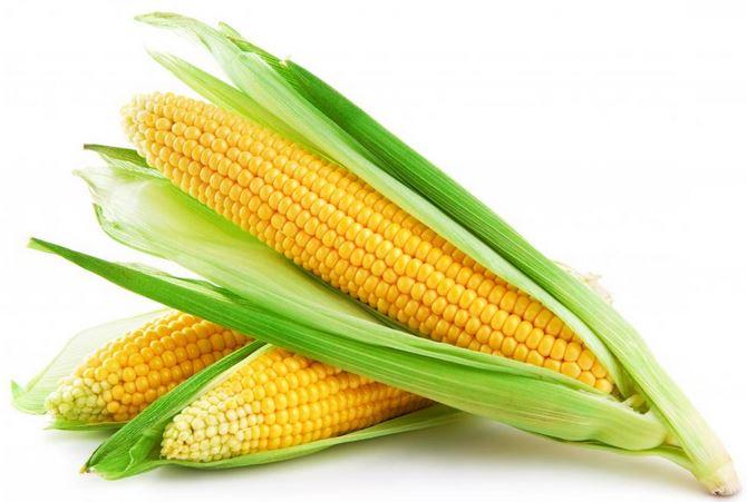 kukurydza-po-modyfikacjami
