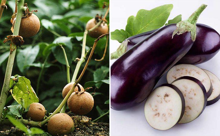 modyfikacje-warzyw