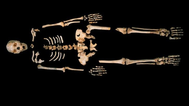 DNA-fm-spain-skeleton