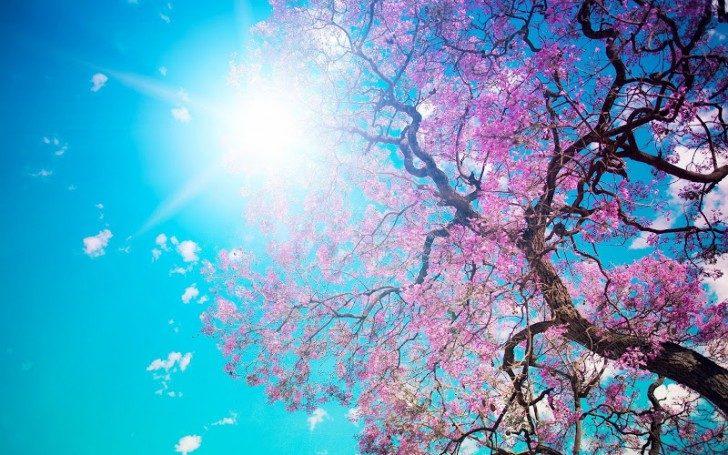 Spring-Blossom-Sunshine